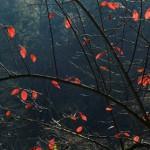 Rote-Blaetter-Gegenlicht-Postkarte_234