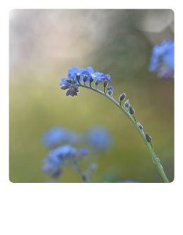 Vergissmeinnicht-Polaroidkarte_Pola08