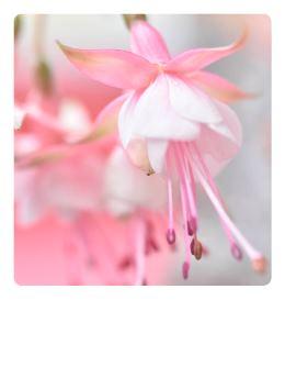 rosa-Fuchsie-Polaroidkarte_Pola06