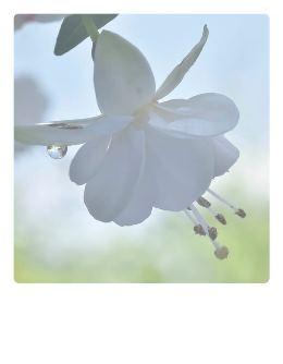 weisse-Fuchsia-Polaroidtkarte_Pola09