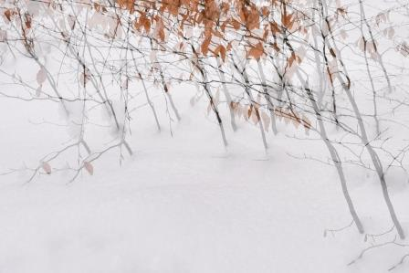 Winterblaetter-Postkarte_283