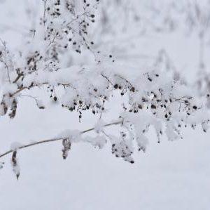 Wintergras-Postkarte_281