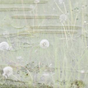 Kunstkarte-Pusteblume-Postkarte_299