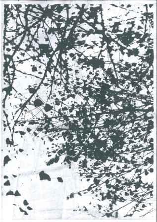 Serie-Birke-01-Postkarte_328